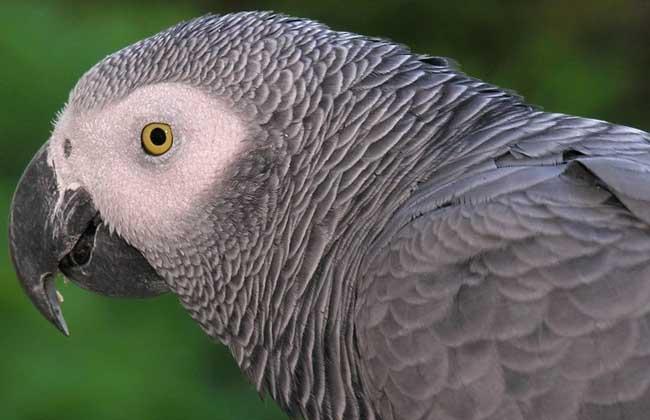世界上最可爱的鹦鹉