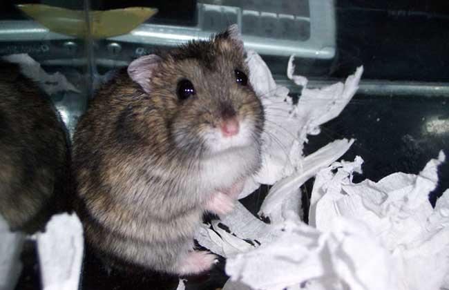怎么赶走老鼠