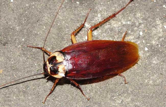 灭蟑螂最有效的方法
