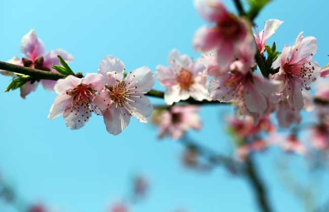 春分是什么意思