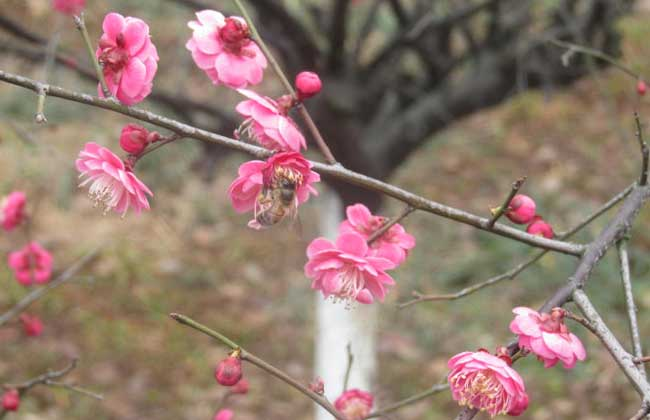 今年什么时候立春