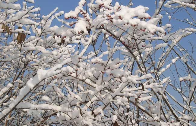 立冬是什么意思