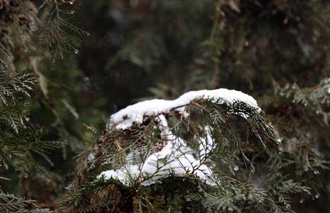 小雪节气是什么意思