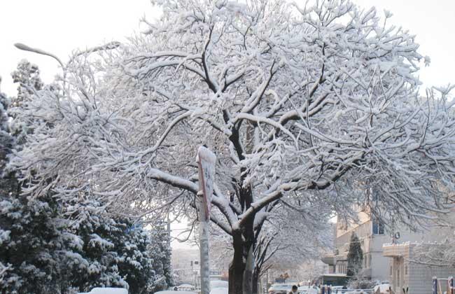 大雪节气是什么意思