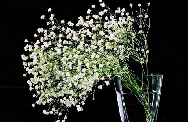 各种花的花语_常见花语大全_花语故事和传说 - 黔农网