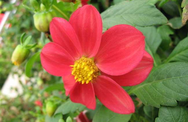 各种花的花语 常见花语大全 花语故事和传说 黔农网