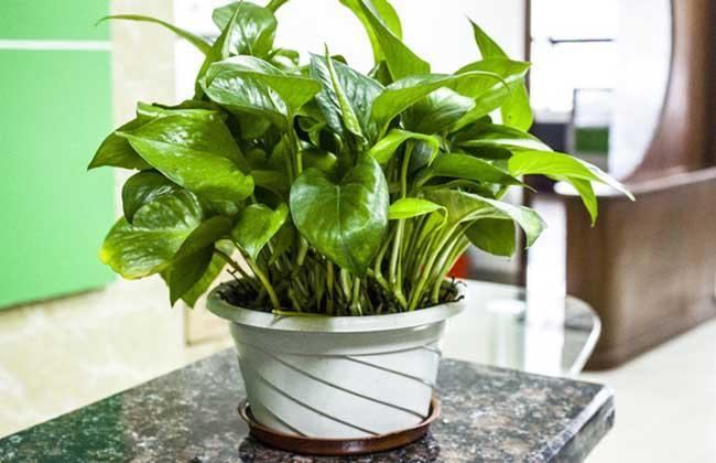 办公桌上放什么植物好?(2)