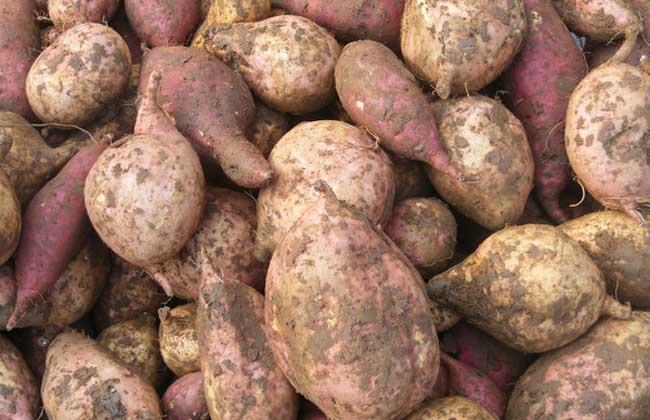 吃红薯会发胖吗?