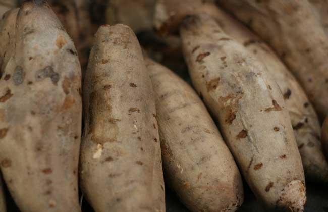 糖尿病人能吃红薯吗