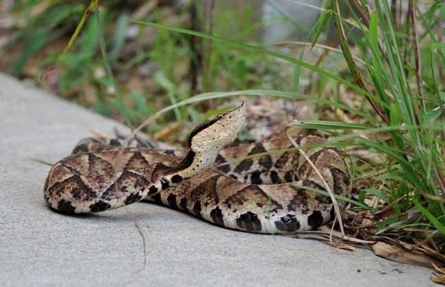 七步蛇是什么蛇