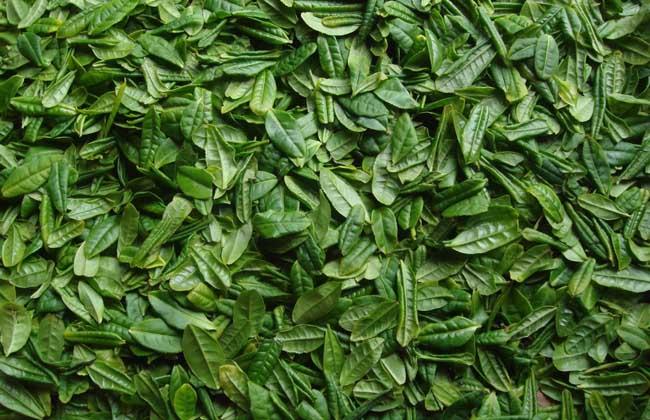 六安瓜片茶图片图片