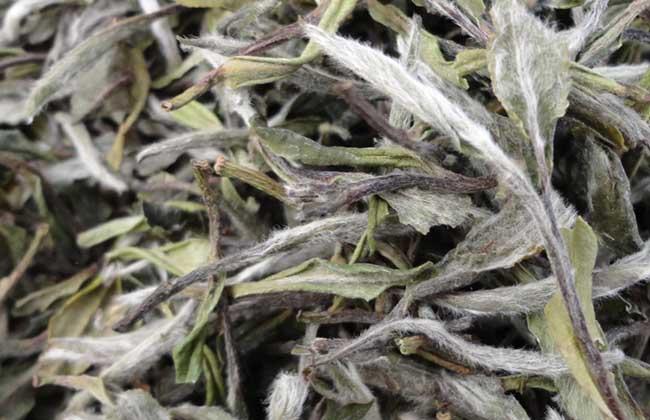 白茶的制作工序流程