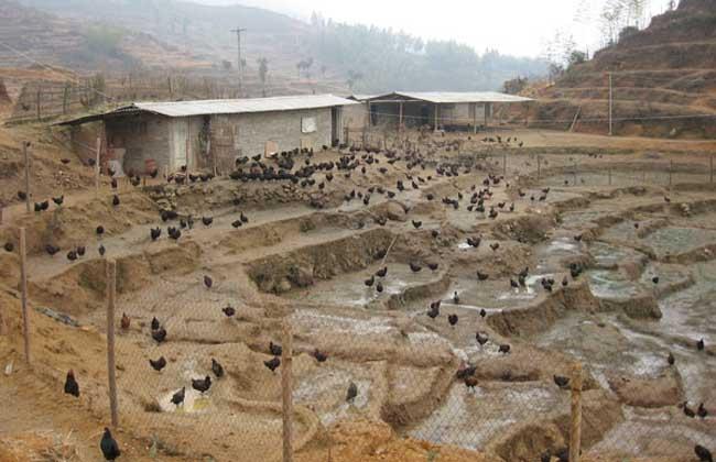 农村养殖好项目有哪些?