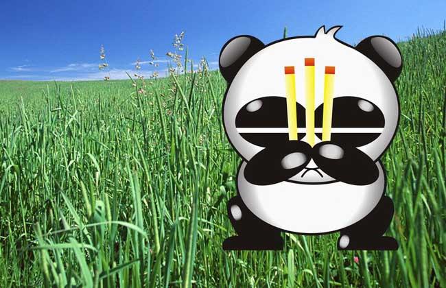 熊猫烧香是什么病毒