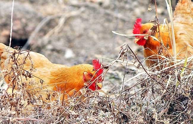 2016年养殖业补贴政策有哪些?