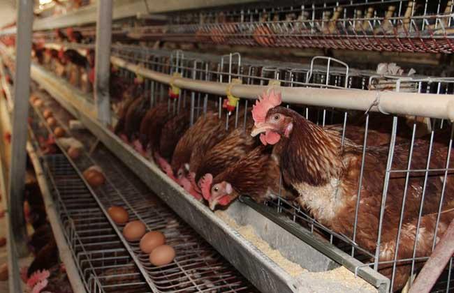畜禽养殖标准化示范创建