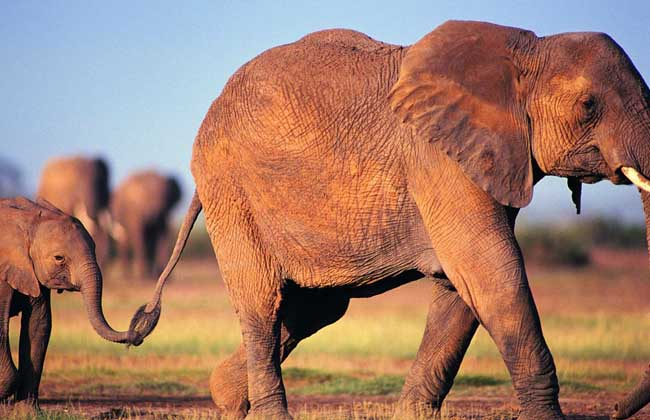 大象的重量有多重