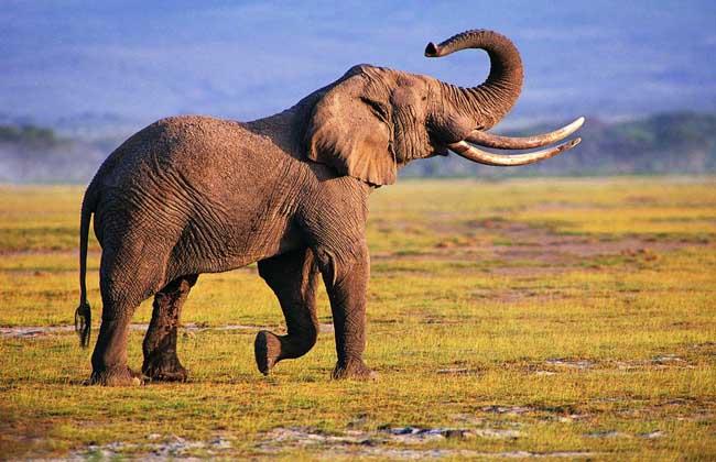 大象种类图片大全