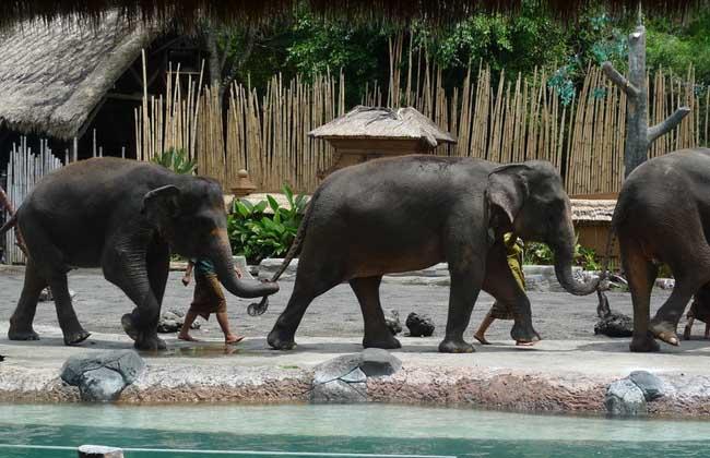 大象是陆地上最大的哺乳动物