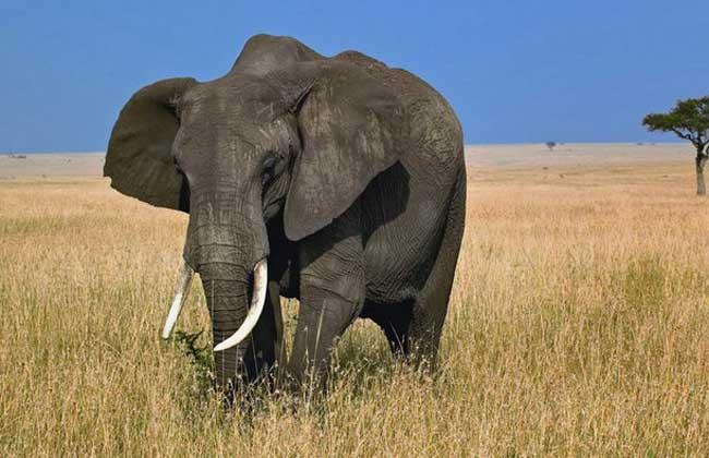 世界上最大的陆地动物