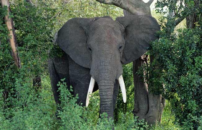 大象墓地真的存在吗?