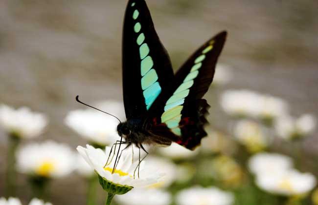 蝴蝶效应是什么意思