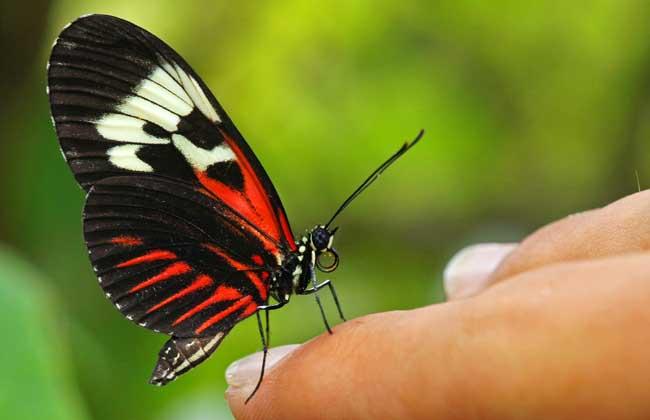 蝴蝶一生的成长过程