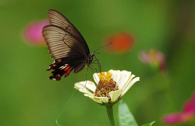 蝴蝶的生活习性