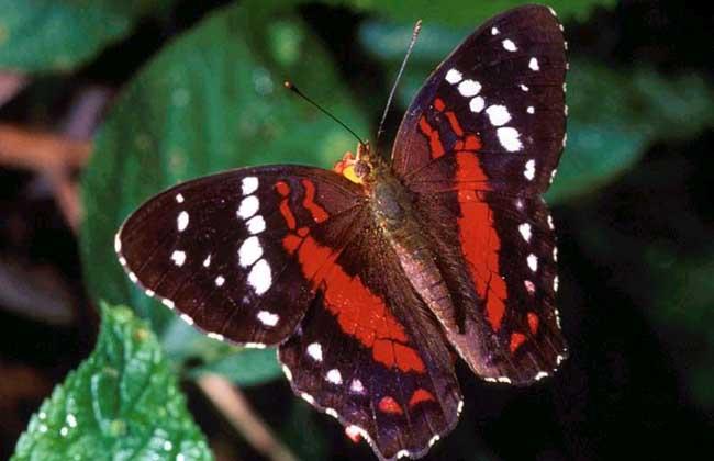 蝴蝶吃什么食物?