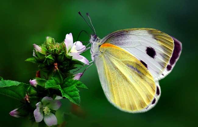 庄周梦蝶的寓意是什么?