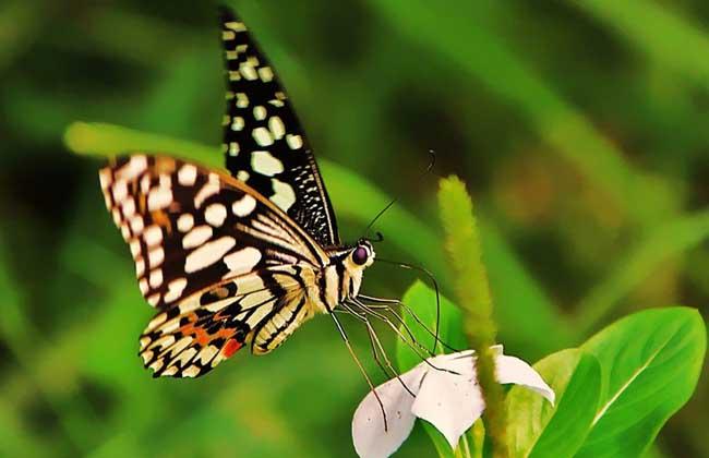 农业资讯 图片资讯 > 正文  蝴蝶全世界大约有14000多种,大部分分布在