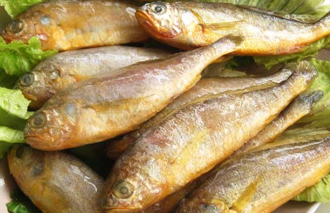 黄花鱼是不是海鱼