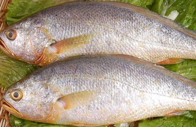 黄花鱼的家常做法