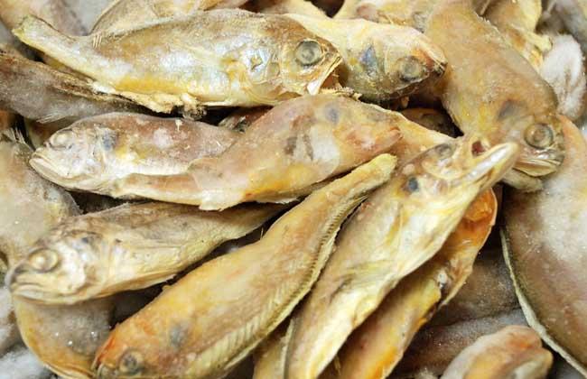 黄花鱼种类图片