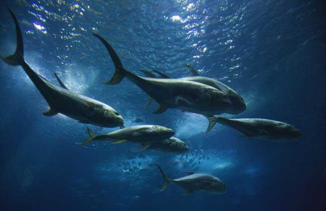 鲸鱼的祖先是什么