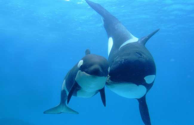 鲸鱼的种类有哪些