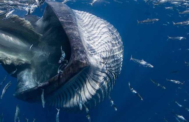 鲸鱼种类图片大全 第3页 农业图鉴 黔农网
