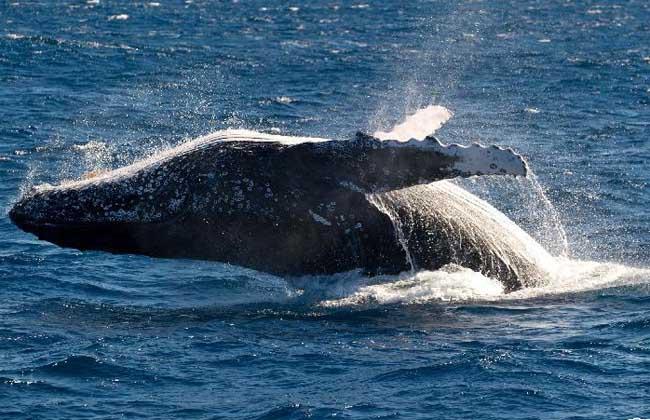 世界上最大的鲸鱼图片