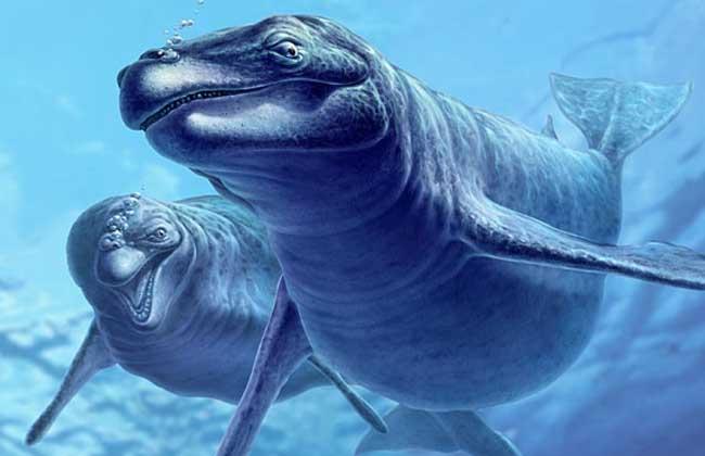 龙王鲸到底有多大