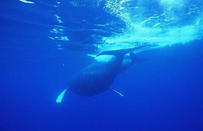 蓝鲸吃什么食物