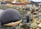 鲸鱼爆炸的危害多大?