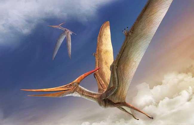 风神翼龙有多大?