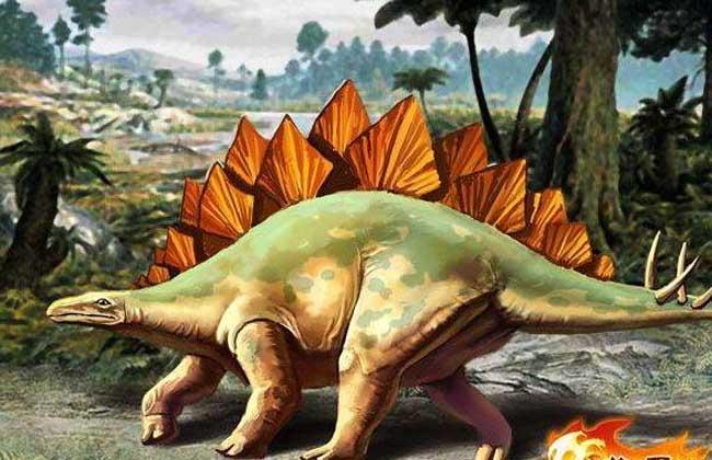 剑龙 剑龙为一种巨大的草食性恐龙,一种生存在侏罗纪晚期的食草性动物,背上有一排巨大的骨质板,以及带有四根尖刺的危险尾巴来防御掠食者的攻击,大约12公尺长和3.5公尺高,重达6吨,居住在平原上,并以群体游牧的方式和其它(如梁龙)等食草动物一同生活。