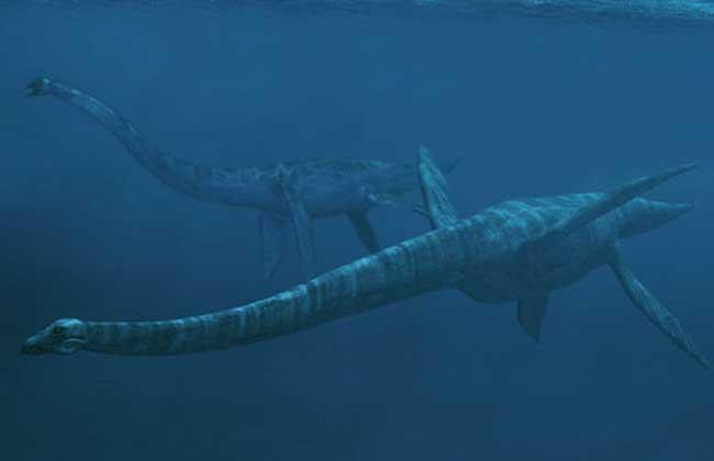 蛇颈龙的资料和图片