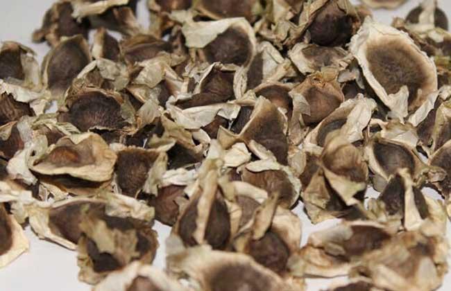 辣木籽价格多少钱