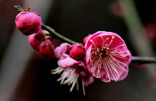 关于描写梅花的诗句