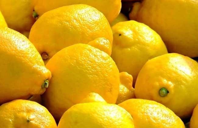 柠檬产地在哪里
