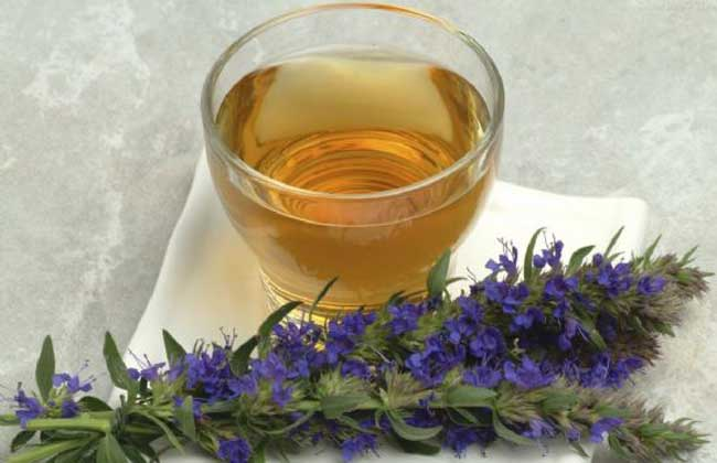 马鞭草茶的功效与作用