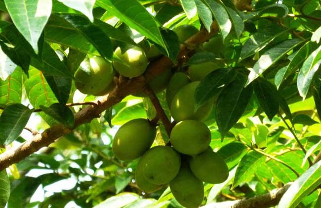橄榄枝的象征意义