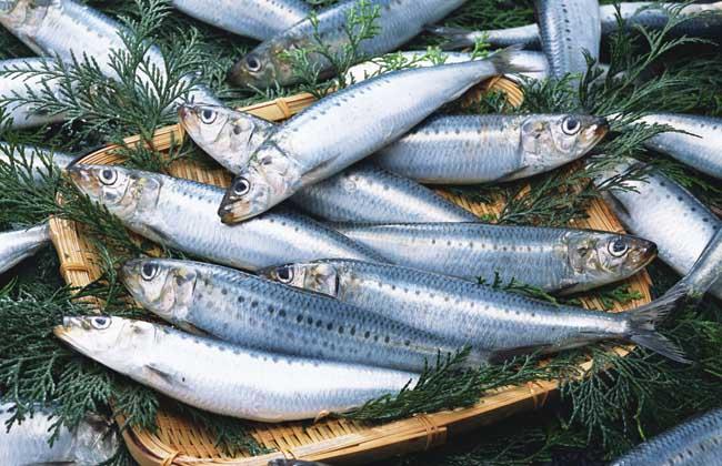 沙丁鱼是深海鱼吗